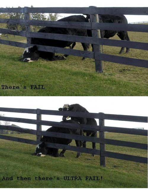 FAIL images Dairy-fail