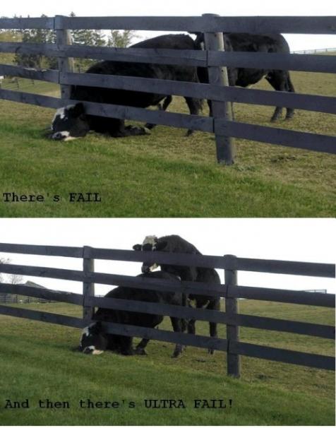Topico de imagens toscas e/ou insanas - Página 3 Dairy-fail